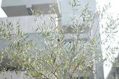 敷地内に植えられている木になった実などは、自由に使ってもよいそうです。(106号室)※モデルルームです。(2014-10-10,専有部,ROOM,1F)