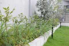 駐車場脇の花壇にはたくさんの植裁が植えられています。(2014-10-10,共用部,OTHER,1F)
