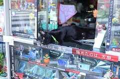 シェアハウス近くのタバコ屋さんには番犬ならぬ、番猫が。(2014-10-10,共用部,ENVIRONMENT,1F)
