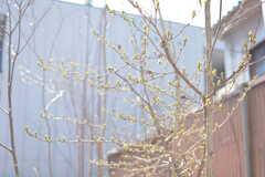 もうすぐ春ですね。(102号室)(2017-03-09,専有部,ROOM,1F)