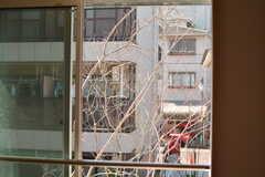 窓の目の前に木が生えています。葉っぱをつければ窓一面緑になるそう。(216号室)(2017-03-09,専有部,ROOM,2F)