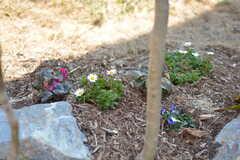 花も咲いています。(2017-03-09,共用部,OTHER,1F)