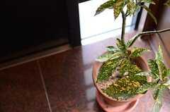 可愛らしいグリーンが出迎えてくれます。(2013-02-25,周辺環境,ENTRANCE,2F)