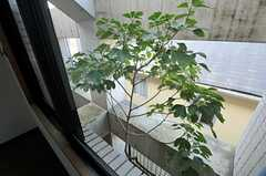 窓の外の様子。青々と繁る木が一本、植えられています。(102号室)(2013-02-25,専有部,ROOM,2F)