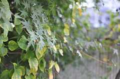 緑もたくさん。(103号室)(2012-10-26,専有部,ROOM,1F)
