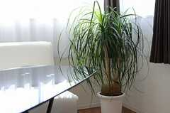 グリーンも鮮やか。(2011-10-16,共用部,LIVINGROOM,14F)