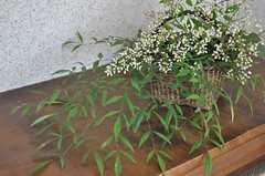 花が飾られています。(102号室)(2011-06-11,専有部,ROOM,1F)