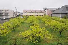窓からの景色。目の前には果樹園。季節で景色は大きく変わります。(210号室)(2011-04-23,専有部,ROOM,2F)