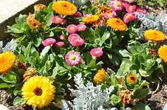 玄関前の花壇では花が咲いています。(2011-04-23,共用部,OTHER,1F)
