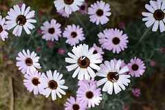 いくつかの花が咲いています。(2015-03-18,共用部,OTHER,1F)