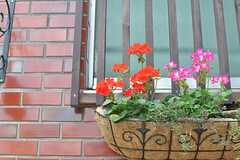 緑だけじゃなく、アプローチには素敵なお花も咲いています。(2012-05-21,共用部,OUTLOOK,1F)