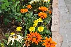 玄関付近の花壇には、お花がいっぱい。(2012-05-21,共用部,TOILET,1F)