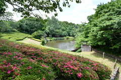 青葉の森公園の様子2。池もあります。(2019-06-03,共用部,ENVIRONMENT,1F)