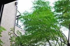 庭は緑でいっぱいです。(2013-10-23,共用部,LIVINGROOM,1F)