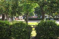 窓の外は公園の緑。(102号室)(2014-06-19,専有部,ROOM,1F)