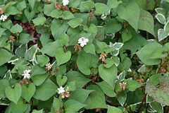 エントランスには季節の植物が咲いています。珍しいドクダミも咲いているそう。(2018-06-18,周辺環境,ENTRANCE,1F)