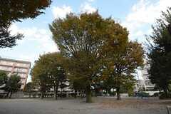 近所の公園の様子。(2014-11-13,共用部,ENVIRONMENT,2F)