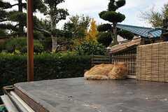 猫が寝ていました。のどかな環境です。(2013-11-28,共用部,ENVIRONMENT,1F)