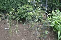 家庭菜園も出来るそう。(2013-07-30,共用部,OTHER,1F)