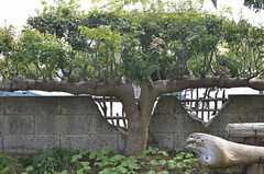 面白い形の木です。(2013-10-10,共用部,OTHER,1F)