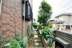 菜園の様子。(2009-06-15,共用部,OTHER,1F)