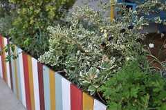 テラスの植栽。(2013-07-09,共用部,OTHER,1F)