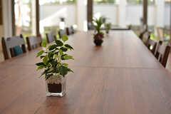 テーブルに飾られたグリーン。(2017-04-19,共用部,LIVINGROOM,1F)