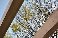 テラスから見た樹木。(2017-04-19,共用部,OTHER,1F)