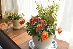 窓際には華が飾られています。(2017-02-06,共用部,LIVINGROOM,1F)