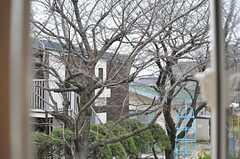 窓から見えるのは桜。春が楽しみです。(208号室)(2012-03-16,専有部,ROOM,2F)