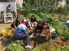同じ敷地にある大家さんの家での芋掘りの様子。 ※事業者様提供素材(2013-02-28,共用部,OTHER,1F)