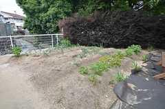 裏の家庭菜園の様子。玉ねぎ、じゃがいもなどが植えられているそう。(2014-06-04,共用部,OTHER,1F)