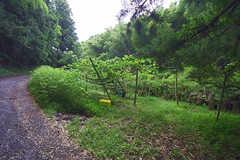 オーナーさんが持つ山の敷地までは徒歩15分ほど。道中にはご近所さんが管理している畑もあります。(2016-06-07,共用部,OTHER,1F)