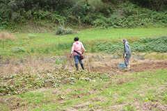 入居者さんとオーナーさんの家族が畑仕事をしている様子。(2016-11-29,共用部,OTHER,1F)