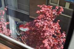 窓からの景色。綺麗な紅葉。(205号室)(2013-05-17,専有部,ROOM,2F)