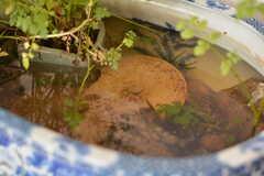 鉢にはメダカがスイスイ。(2017-04-25,共用部,LIVINGROOM,2F)