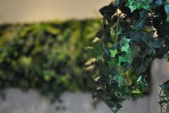 グリーンは造花です。(2013-10-21,共用部,LAUNDRY,1F)