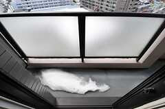 ベランダの様子。(801号室犬部屋)(2013-03-25,共用部,OTHER,8F)