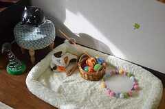 猫の遊び道具。(802号室猫部屋)(2013-03-25,共用部,OTHER,8F)