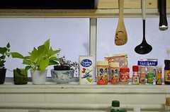 窓際の調味料。(2012-10-03,共用部,KITCHEN,1F)