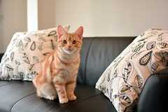 オーナーさんの愛猫3兄弟の末っ子、マフィン。(2016-04-05,共用部,OTHER,2F)
