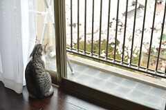 外を見るのが好きなブラン。桜との組み合わせが素敵です。(102号室)(2016-04-05,専有部,ROOM,1F)