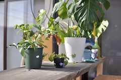 テラスに飾られた植物たち。(2013-04-01,共用部,LIVINGROOM,1F)