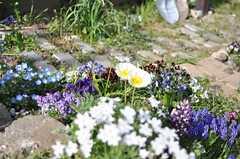 庭に植えられたお花たち。(2013-04-01,専有部,ROOM,1F)