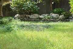 いい感じの芝生です。(2015-10-20,共用部,OTHER,1F)
