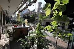 すぐ近所にある事業者さんの事務所2。緑がいっぱい。近隣の人たちが集う場所でもあるんだそう。(2013-08-02,共用部,ENVIRONMENT,1F)