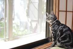 ナルトくんは外を見るのがお好き。(204号室)(2013-09-20,専有部,ROOM,2F)