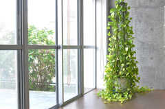 窓辺の緑。(2010-10-15,共用部,OTHER,1F)