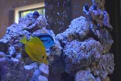 黄色と青は仲良しです。(2016-03-01,共用部,LIVINGROOM,1F)