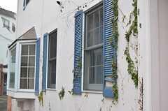 ツタと窓の色合いが素敵。(2014-02-27,共用部,OUTLOOK,1F)